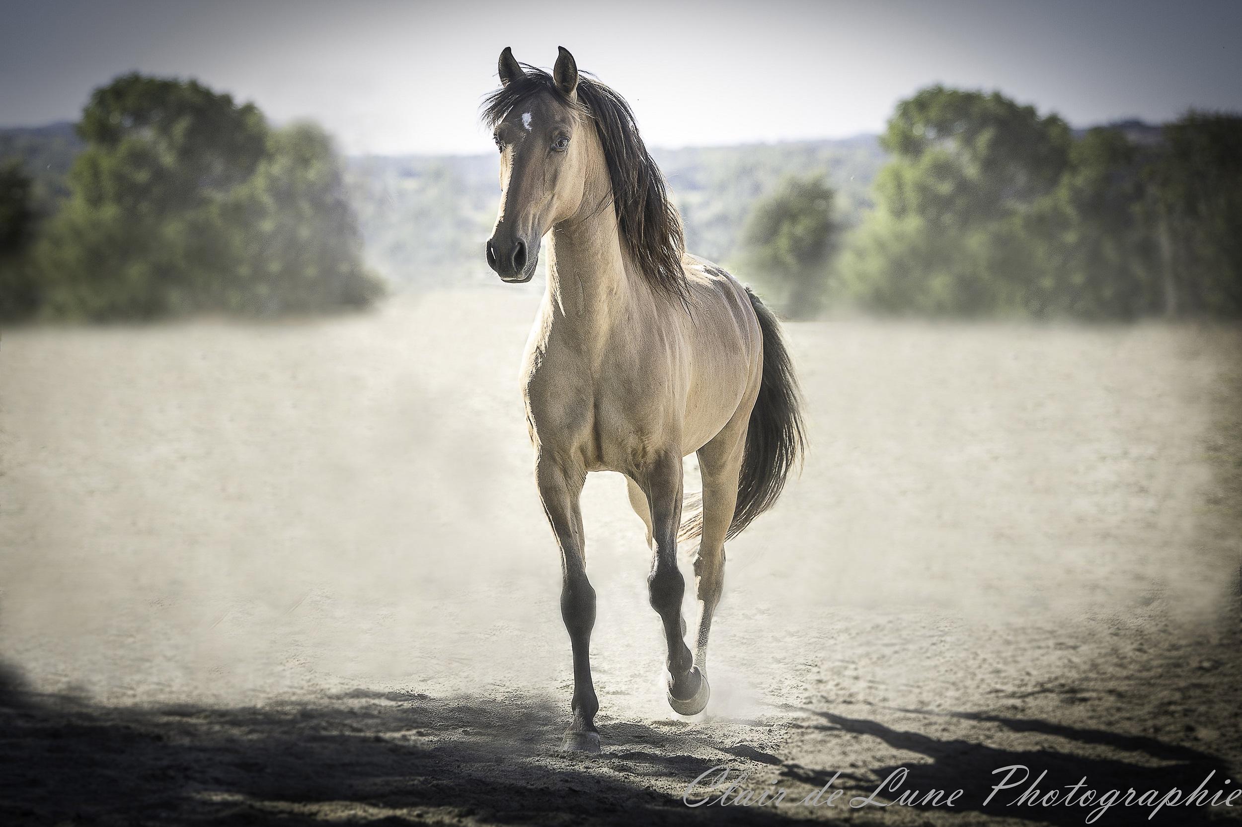 Equestre39